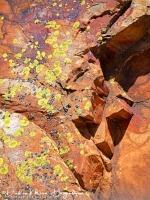 Korstmossen op rode rots-MDH
