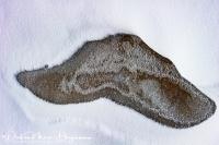 IJzige snor-Icy Mustache-EisigerSchnurrbart