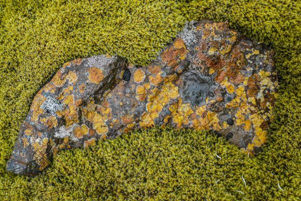 rots-met-korstmos-in-een-bed-van-mos-20141219-1522475581817C29BF-75C9-8AD3-0099-891E642045E8.jpg