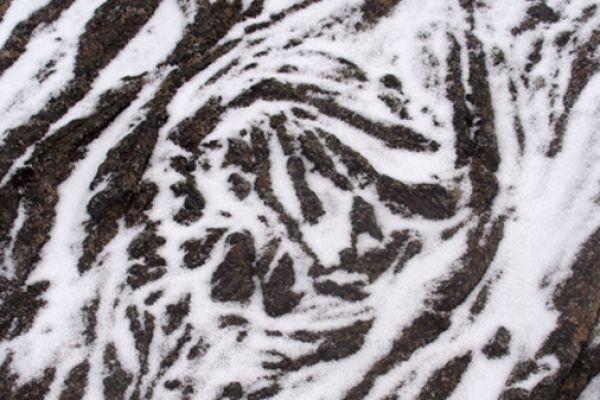 touwlava-met-sneeuw-floodbasalt-with-snow-20141219-14145720036BA1EE55-A365-7589-5731-6F895F4951DF.jpg