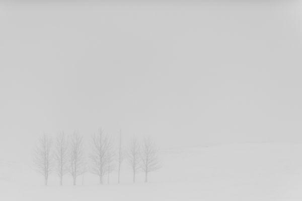 laugarvatn-bomen-in-sneeuwstorm-trees-in-a-snowstorm-20150224-158947394291803A96-780B-DF0F-F861-BEAC1B57D0AB.jpg