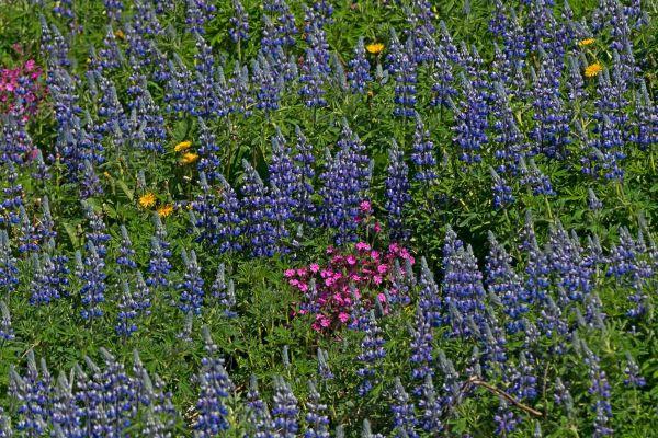kleuren-palet-op-de-westman-eilanden-colour-palette-from-the-westmann-icelands-farbe-palette-von-der-westmann-island-20170625-1941684763C4108664-613F-22AA-6088-C09CED6A69BD.jpg
