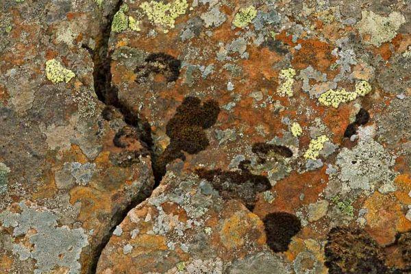 korstmossen-lichen-flechte-20170625-19489937838C4C43E4-1296-D085-8D3E-ACF44A6CBA3C.jpg