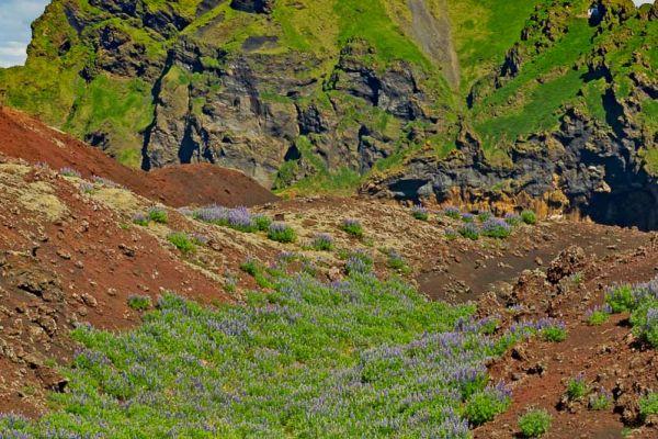 vestmannaeyjar-of-westmaneilanden-westman-islands-westmaennerinseln-20170625-196607040734C2F806-CE7C-DBB5-F183-D52D15426092.jpg