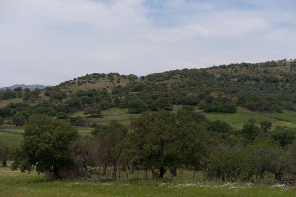landschap-landscape-20150527-136139822159325631-275A-7B70-3890-C1F1E4EC4C35.jpg