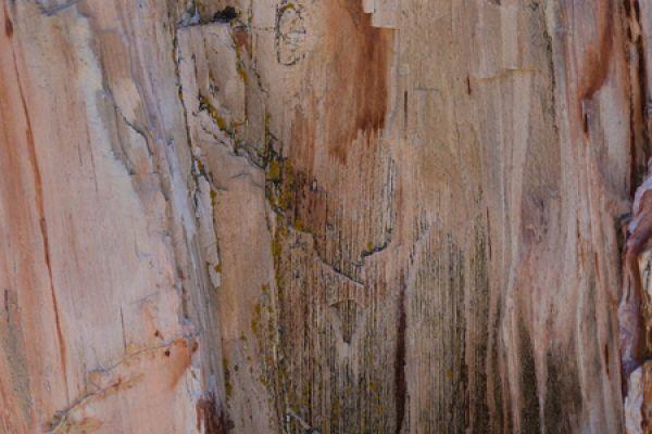 versteend-woud-stone-forrest-inside-a-trunk-20150527-1683366567D9A844EE-E918-50D1-0E21-8F99640BB06D.jpg