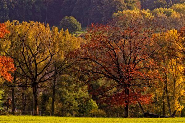 herfst-in-zuid-limburg-autumn-collors-1-20141220-1636104840F1D84620-E84D-C983-8528-8E60E21DA217.jpg