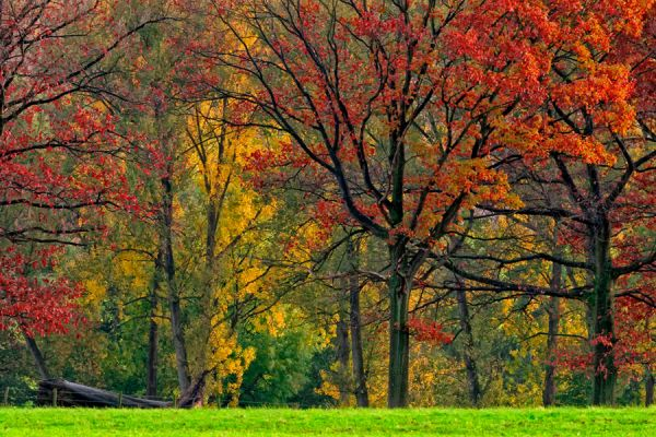herfst-in-zuid-limburg-autumn-collors-20141220-1456539214F8A5876A-C8E9-E5F9-D8BC-CDF267187832.jpg