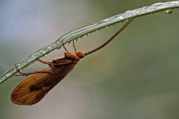 kokerjuffer-caddisfly-trichoptera-20141220-13077882506D52BD8D-9597-C742-3B59-BD75E678FB29.jpg