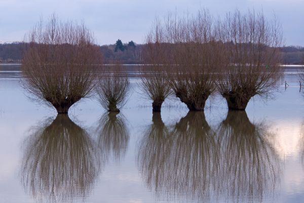 langs-de-ijssel-along-the-river-ijssel-2-20141220-1082166843E4377318-A089-9BF6-6D9D-09A7BF4A07A5.jpg