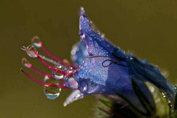 slangenkruid-vipers-bugloss-or-blue-weed-echium-vulgare-20141220-1513896772646CA14D-1C51-016C-64C3-37DF0B91A06A.jpg
