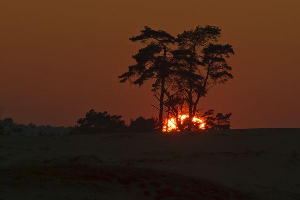 zonsondergang-op-de-veluwe-sundown-on-the-veluwe-national-park-20141220-1698878883524728DE-AC41-3EDA-DC05-DF4F5B57CB53.jpg
