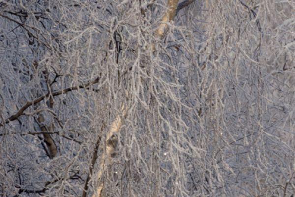 rijp-op-bomen-ripe-on-trees-1-20141219-2008452992C435F701-9BB6-F1F0-7D1D-9102340F7B77.jpg
