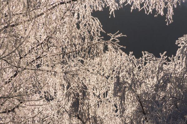 rijp-op-bomen-ripe-on-trees-2-20141219-154387662958C0844D-C06A-B030-E3A3-6F1E66F3CFBF.jpg