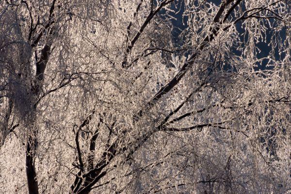 rijp-op-bomen-ripe-on-trees-20141219-192208703337E546D4-9147-659F-DA5C-9109C92CA2D8.jpg