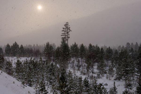 sneeuwstorm-snowstorm-20141219-1257356131A59C773A-6AEE-BAE3-748F-2105D1EADC5D.jpg