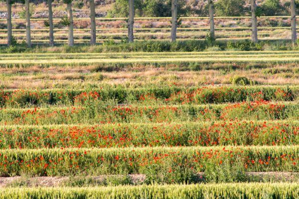 lijnenspel-in-spaans-landschap-spanish-pyrenean-landscape-10-20141219-104564583564439069-453D-8A7A-C7A9-E982679D795A.jpg