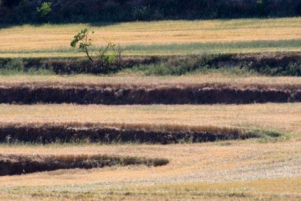 lijnenspel-in-spaans-landschap-spanish-pyrenean-landscape-20141219-1737092718D6C67904-4E96-D015-CC20-DD73191B8524.jpg