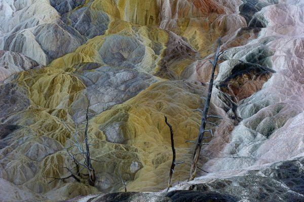 mammoth-hot-spring-living-color-trees05252633-9F68-BB42-9D94-BE04E6FB5806.jpg