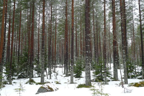 bos-forest-wald-20160501-11373686778CE53133-53CE-90B1-9CC2-608B80BF73CE.jpg