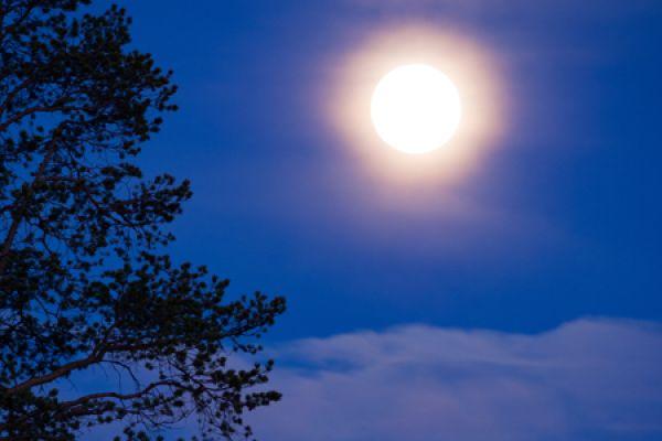 volle-maan-full-moon-vollmond-20160501-168320023311D7AFD5-955C-300D-4807-473BCD29C589.jpg