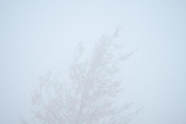 berk-in-mist-birch-in-fog-birke-im-nebel-20171015-147663413846718E0F-B980-5B5D-284E-3FBA9CBDD826.jpg