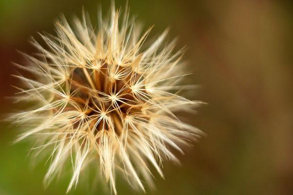 bloemen-zon-20171015-15690661225522A520-EB5C-0C75-38B6-B34BCAB1D874.jpg