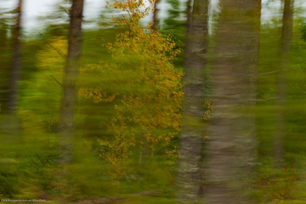 bomen-komen-voorbij-trees-are-comming-by-baeume-kommen-vorbei-20171015-130077554480B319DE-93BD-8FFA-3A24-2A2BD2BF9F2C.jpg