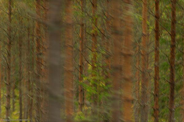 bomen-komen-voorbij-trees-are-comming-by-baeume-kommen-vorbei-20171015-1752963712C00CA751-0C17-A428-CACF-9637FBDBA957.jpg