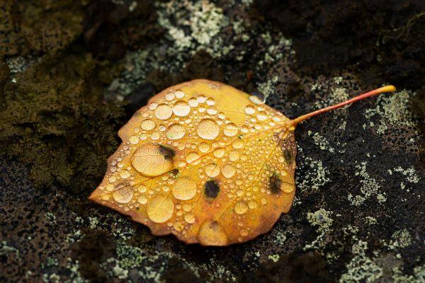 dauw-op-dood-blad-dew-on-dead-leaf-tau-auf-totes-blatt-20171015-14721310045B41F536-FC93-00C5-F2EE-10DEACE0BCEB.jpg