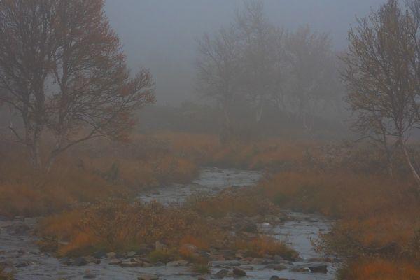flatruet-in-de-mist-flatruet-in-fog-flatruet-im-nebel-20171015-1145928405932E012F-3B43-2B92-E921-4688A905F523.jpg