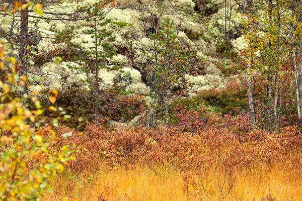 park-hamra-in-herfst-kleuren-hamra-national-park-in-autumn-colors-hamra-national-park-im-herbst-20171015-199461085287F8DD73-7504-8AA9-A73F-87FE1EFD732D.jpg