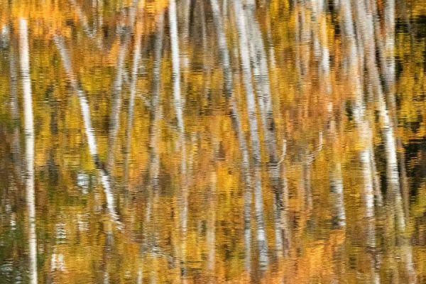 spiegelbeeld-vertel-eens-even-birch-reflection-barke-reflexion-20171015-1079745857B7DA9FA3-AC4A-9321-88D1-9DA643035464.jpg