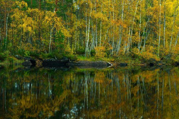 spiegeling-van-berken-birch-reflection-barke-reflexion-20171015-17946460273BDD729A-F0A8-7882-F8B9-061AEB77B606.jpg
