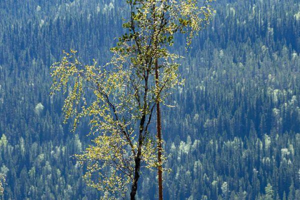 bomen-liefde-tree-love-baumen-liebe-20180625-1899628514781937C7-674F-702A-D64A-BF1CBFF578A9.jpg