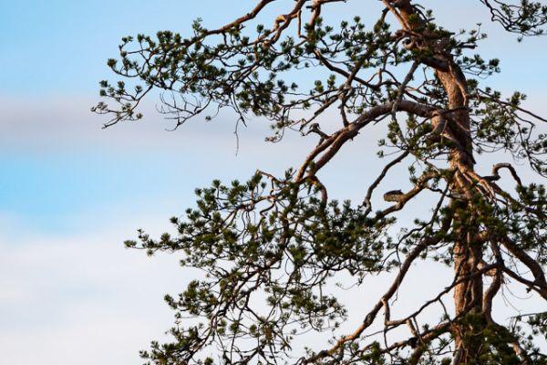 groenpootruiter-common-greenshank-gruenschenkel-tringa-nebularia-1-20180625-183820638664A44B23-422B-7309-15C1-20AB0AC71D83.jpg