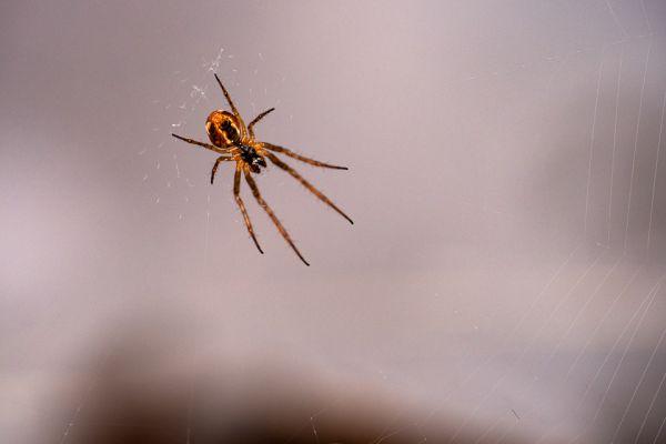 kruisspin-spider-webspinnen-arachnida-20180625-1173427006F7946367-C473-7F51-1606-AF2A602ACA1C.jpg