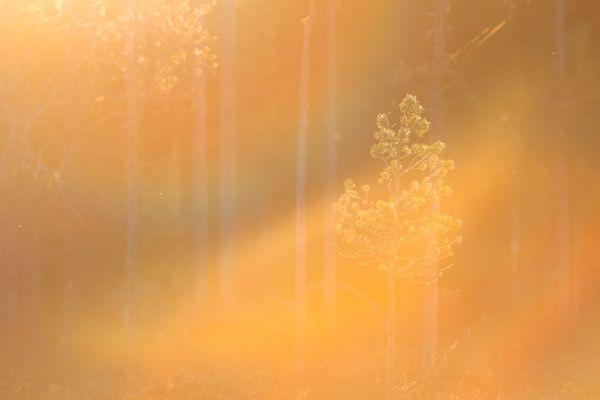 laatste-zonlicht-last-sunlight-letztes-sonnenlicht-20180625-14992034566CDC4D2A-D3DC-19E1-1B1B-5E6F5C6026F2.jpg