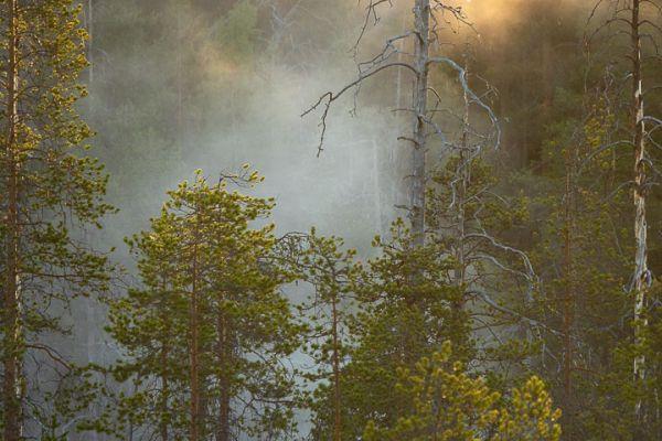 witte-wieven-mist-in-forrest-nebel-im-wald-3-20180625-16307231377D3EA0CA-02FD-3C36-4850-ECCE816FD170.jpg
