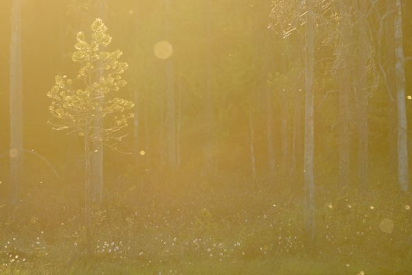 witte-wieven-mist-in-forrest-nebel-im-wald-4-20180625-1171112284B23A2D63-6D14-AD95-A738-1EA842A541D3.jpg