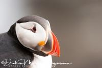 papegaaiduiker_puffin_fratercula_arctica_7_20141219_1977371351