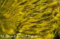 warmwaterbron_bij_hotspring_at_landmannalaugar_20141219_1695171312