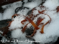 kelp_in_sneeuw_20141219_1362730665
