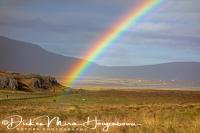 ijslands_paard_in_regenboog_-_icelandic_horse_in_rainbow_-_islandpferd_in_regenbogen__20161009_1322610352