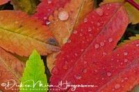 herfst_kleuren_-_autumn_collors_-_herbst_farben_20161009_1213219531
