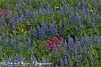kleuren_palet_op_de_westman_eilanden_-_colour_palette_from_the_westmann_icelands_-_farbe_palette_von_der_westmann_island_20170625_1941684763