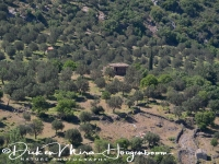 lesbos_binnenland_-_lesvos_inland_with_olive_trees_20150527_1217924939