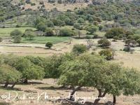 olijfboomgaard_-_olivetrees_20150527_1173236530