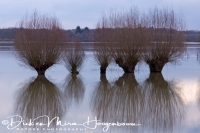 langs_de_ijssel_along_the_river_ijssel_2_20141220_1082166843
