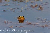 groene_kikker_waterfrog_pelophylax_20141220_1234871811